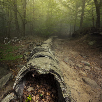 Llum dins el túnel de Carol Baeza